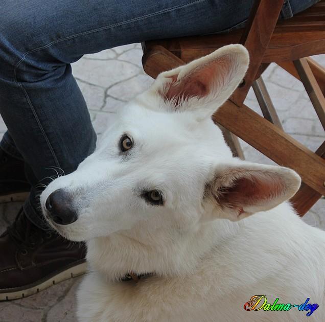Osko le chien de ma fille