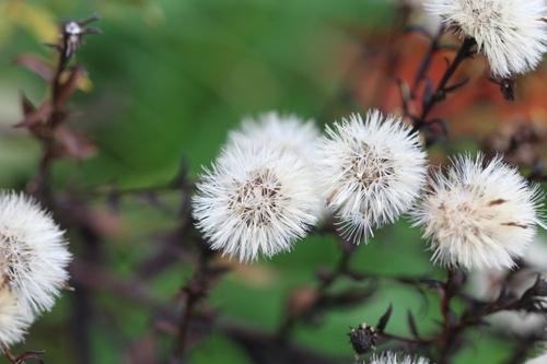 Beautés hivernales - 1