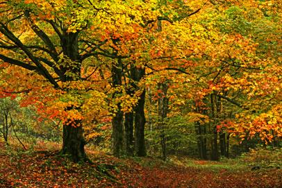 L'automne et Voyage en automne  - La suite des amis