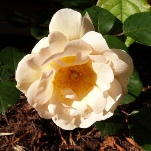 rosier-penelope---juin-2014.jpg