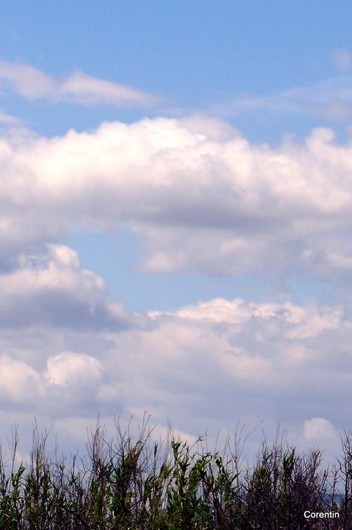 Herbes et ciel