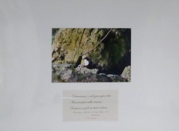 La remise des prix aux lauréats du concours-photo sur l'oiseau, organisé par la bibliothèque Municipale de Châtillon sur Seine...