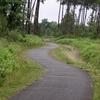 La piste cyclable à travers les pins des Landes