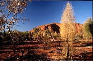 Australie parc national Uluru d0922d4aa56a4b6bb8968ebcecc5a
