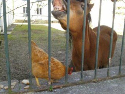 Flavy et sa poule (3)