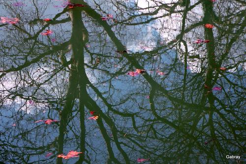 Les reflets dans l'eau du Canal du Midi