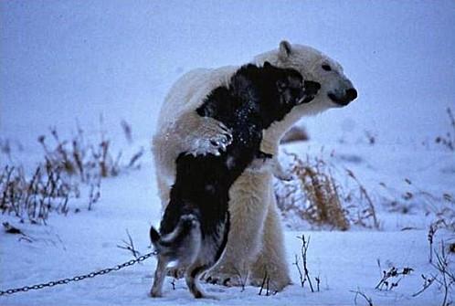 ours-calin-chien-noir-2.jpg