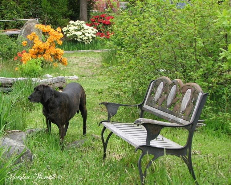 Nouvelles du Canada 178 : Les chiens au jardin