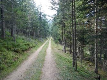 Puis on traverse la forêt