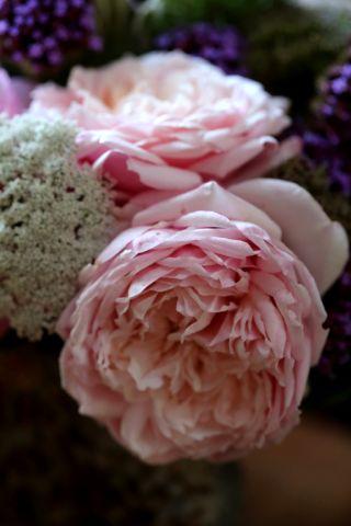 Roses, le Retour