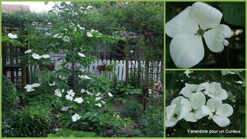 Arbustes au jardin