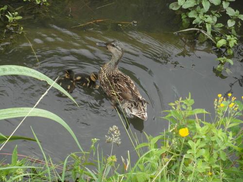 Maman protectrice