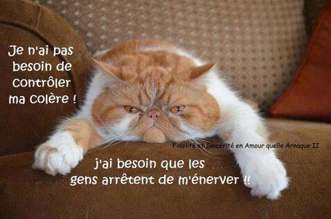 Je n'ai pas besoin de contrôler ma colère! J'ai besoin que les gens arrêtent de m'énerver!! #citationsmarrantes chats colere ennerver humour drole