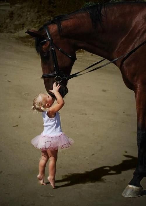 """All horses deserve, at least once in their life, to be loved by a little girl.""  -Author Unknown my girls and Allie!:"