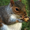 hyde-park---squirrel-15.jpg