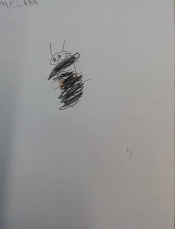 Observer et dessiner