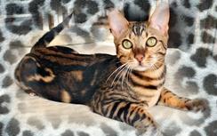 Idy8295753-bw-leopard-peau-arriere-plan-ou-la-texture-grande-resolution