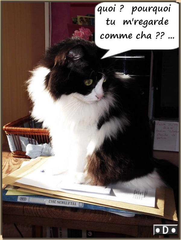 Domino attend ses chaminettes et chaminous ....