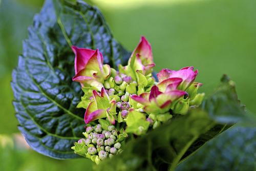 Juin :  Quatre, cinq, six ... cueillir des cerises