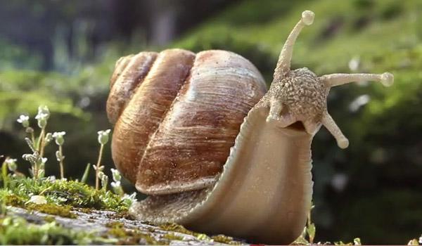 L'escargot (Pierre Menanteau)