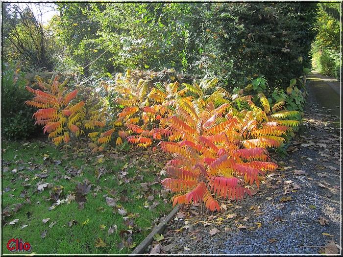 Au jardin en cette fin du mois d'octobre 2013.