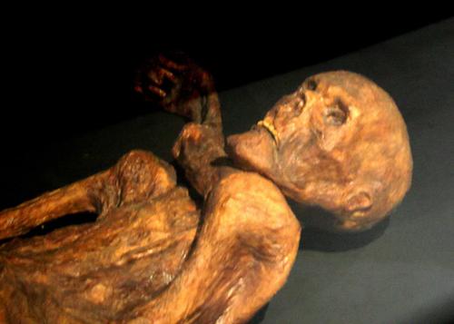 Ötzi – l'homme des glaces livre ses secrets