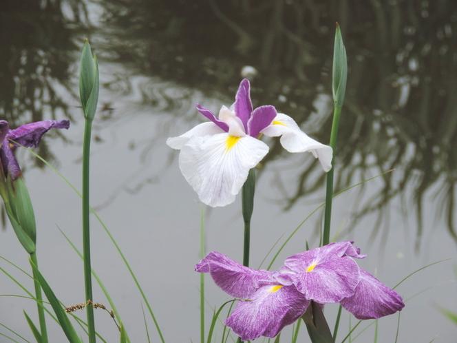 Regard sur le Jardin des Plantes de Nantes