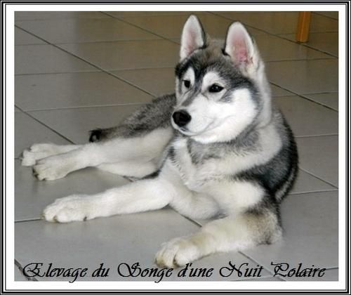 Houka (3,5 mois)