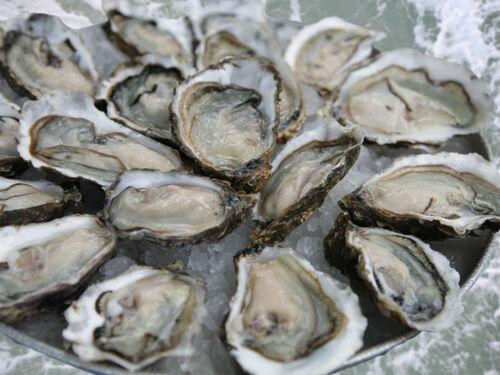 Le Grand Almanach de la Frnce : Les huîtres royales