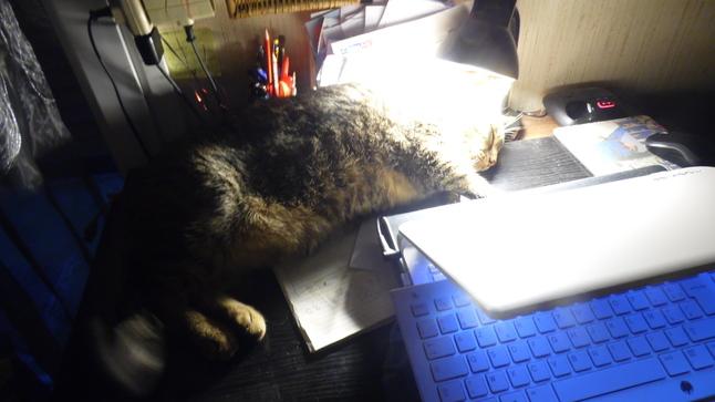 Moi le Chat !
