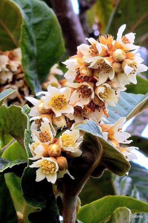 z01---Bouquet-de-fleurs.JPG