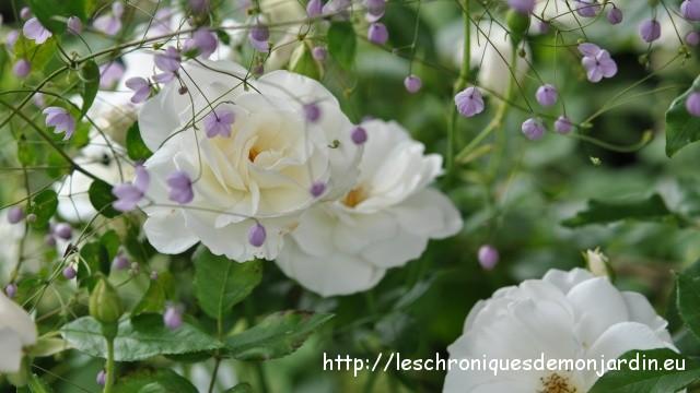 Seeds of Love : Portrait d' Anciens : Christophe