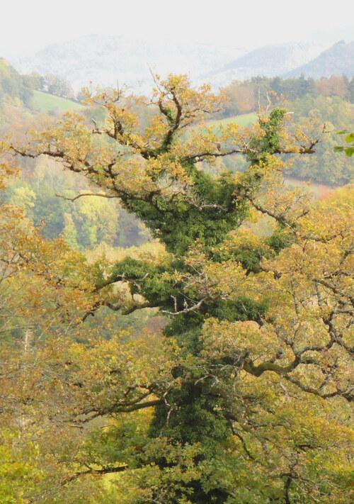 En automne dans les bois