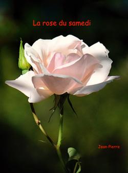 La rose du samedi n° 21 chez Jean Pierre