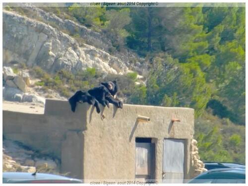 Réserve Africaine de SIGEAN   ( Vacances 2014 a St Cyprien)