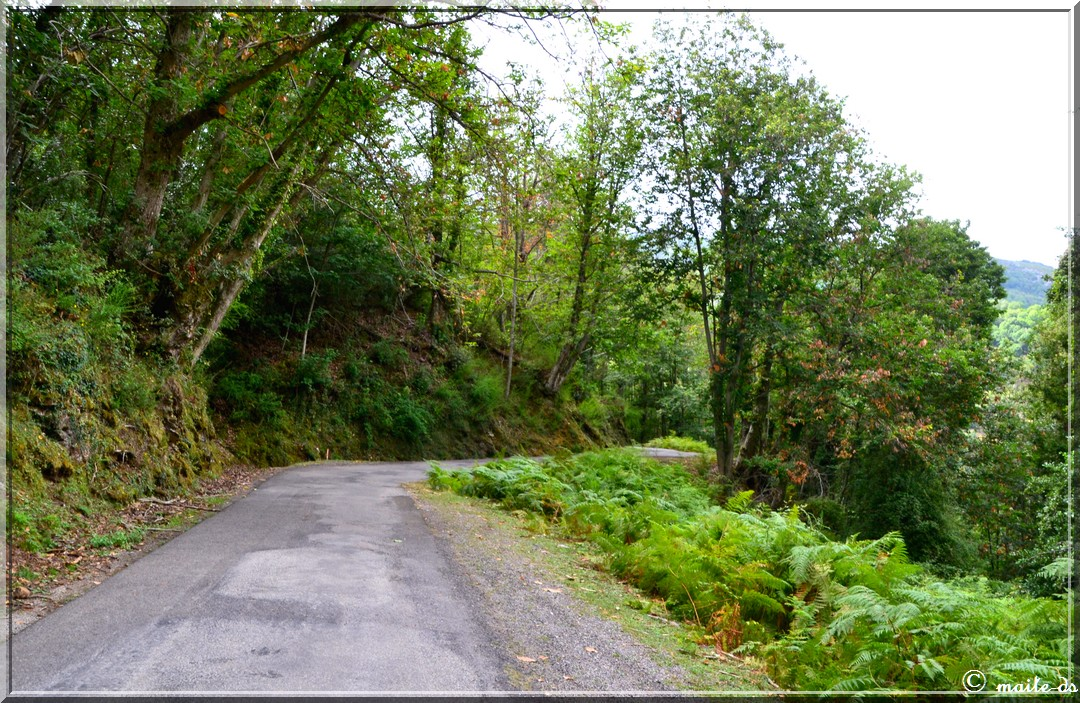 Sur la route du col de Saint-Antoine - Corse