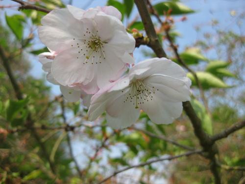 Les fleurs de la semaine gérées par Jean Pierre