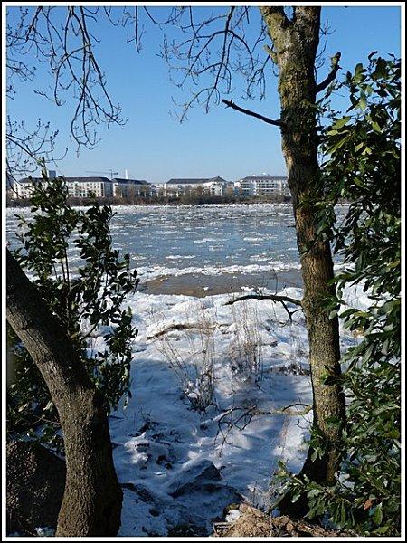 glace-en-tre-les-arbres.jpg