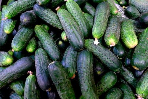 Au marché : tomates et concombres (2)