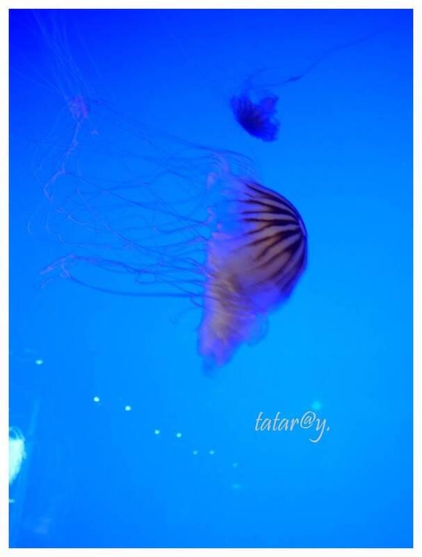 Aquarium. La Rochelle. 2/3.