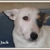 Jack JR 2