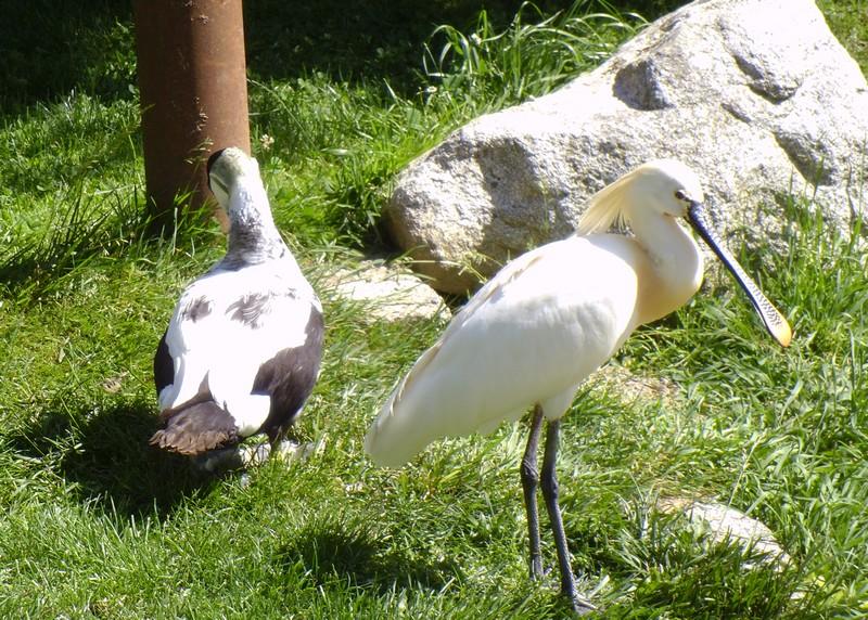 Parc Animalier des Pyrénées,  Argelès-Gazost (65) (2)