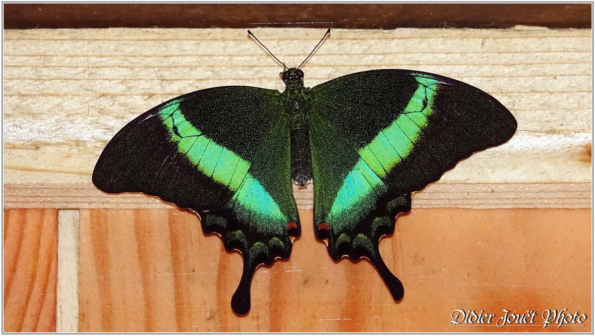 Méli-Mélo (27) - Papillons Exotiques