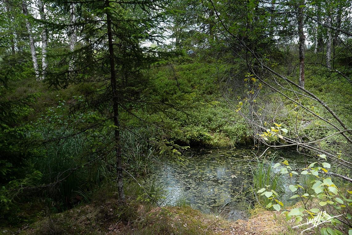 Frasne : Un tour des tourbières  (2)