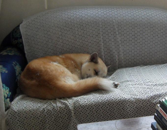 Super le nouveau canapé