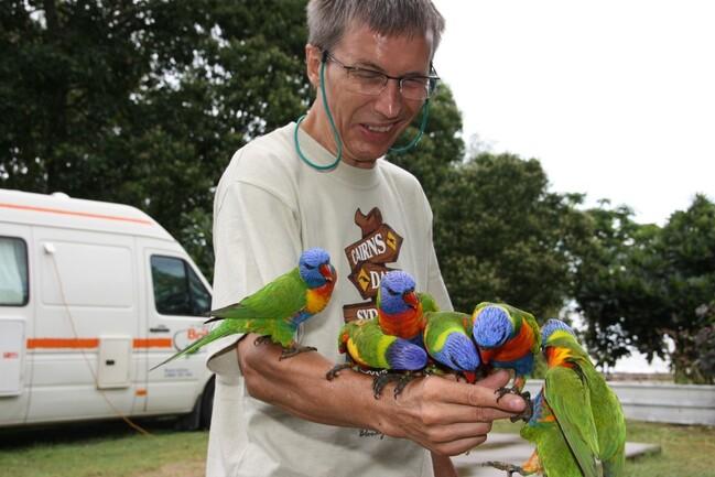 perroquets-vert-Clairview--48-.jpg
