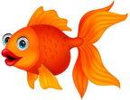 Catégorie Animaux aquatiques - Poisson rouge