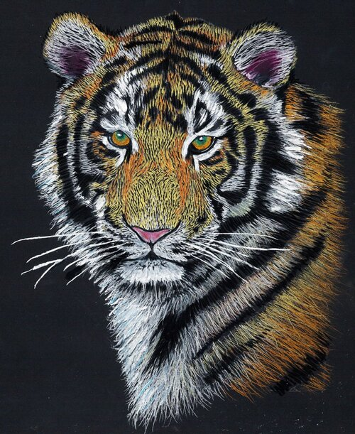 Learn how to draw a Tiger by Mont Marte