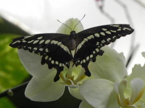 Ferme aux papillons  à Vannes 56