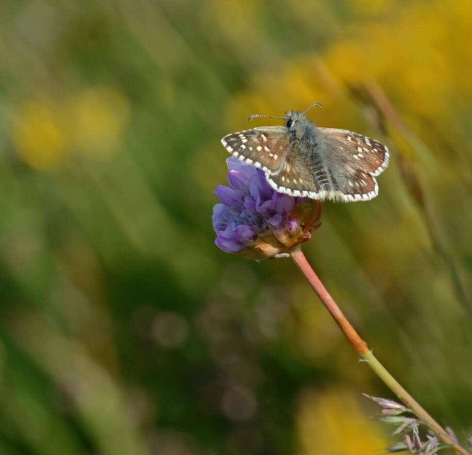 Insectes-papillons-5-5790.jpg